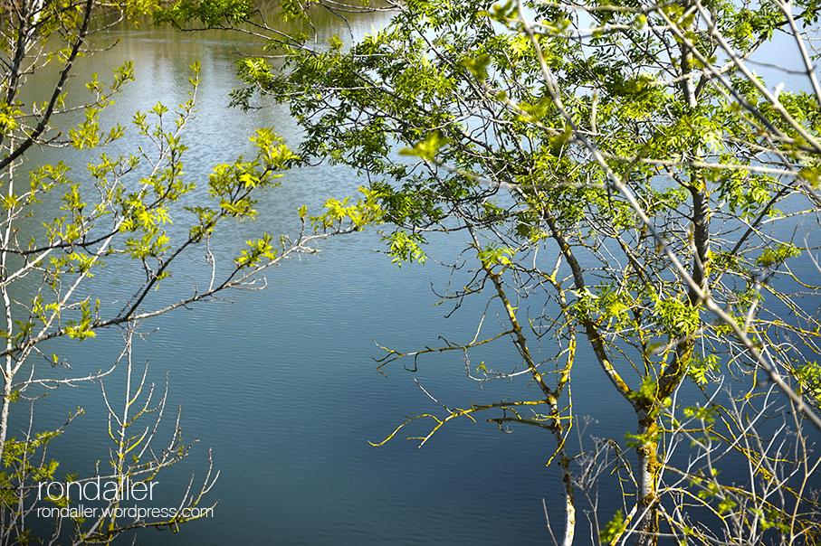 Itinerari pel Fluvià. El riu vist entre els arbres. Alt Empordà
